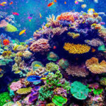 Coral Reef ecosystems in Coastal environment