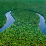 Congo River and forest- Top Facts you should Know