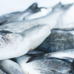 The Best Incredible Facts About Barramundi Fish