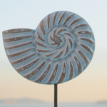 What Is Nautilus Shells & Its Importance
